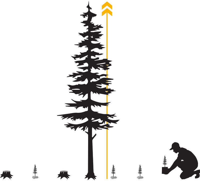 Sustainably Sourced Wood for Mass Timber Construction - Modern Forestry Harvesting & Planting